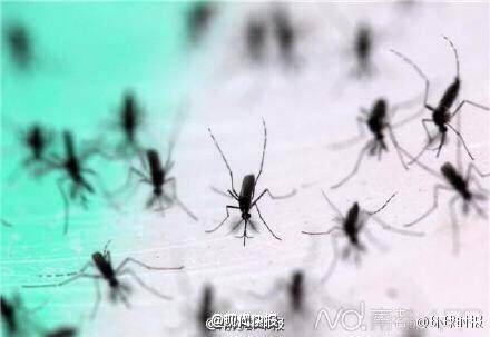 Fábrica en China produce 1 millón de mosquitos por semana