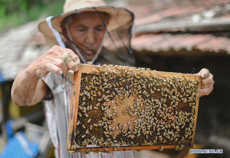 FOREIGN201805251621000374742706597 - Desarrollo de la apicultura reduce la pobreza en Jilin - El Apicultor Español: Actitud y Aptitud Apícola