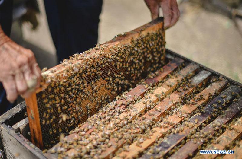 FOREIGN201805251621000473140208076 - Desarrollo de la apicultura reduce la pobreza en Jilin - El Apicultor Español: Actitud y Aptitud Apícola