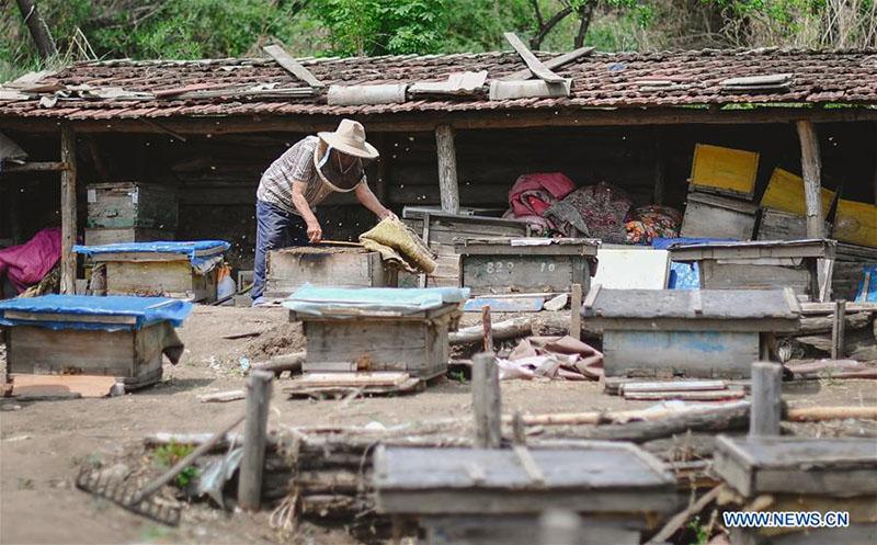 FOREIGN201805251622000062767325671 - Desarrollo de la apicultura reduce la pobreza en Jilin - El Apicultor Español: Actitud y Aptitud Apícola