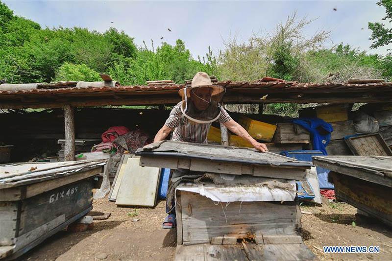 FOREIGN201805251622000153012437179 - Desarrollo de la apicultura reduce la pobreza en Jilin - El Apicultor Español: Actitud y Aptitud Apícola