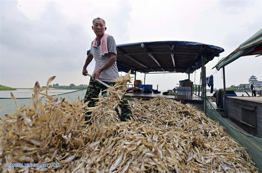 Anhui: Pescadores embarcan anchoas en área Lago Hongze de Huai'an