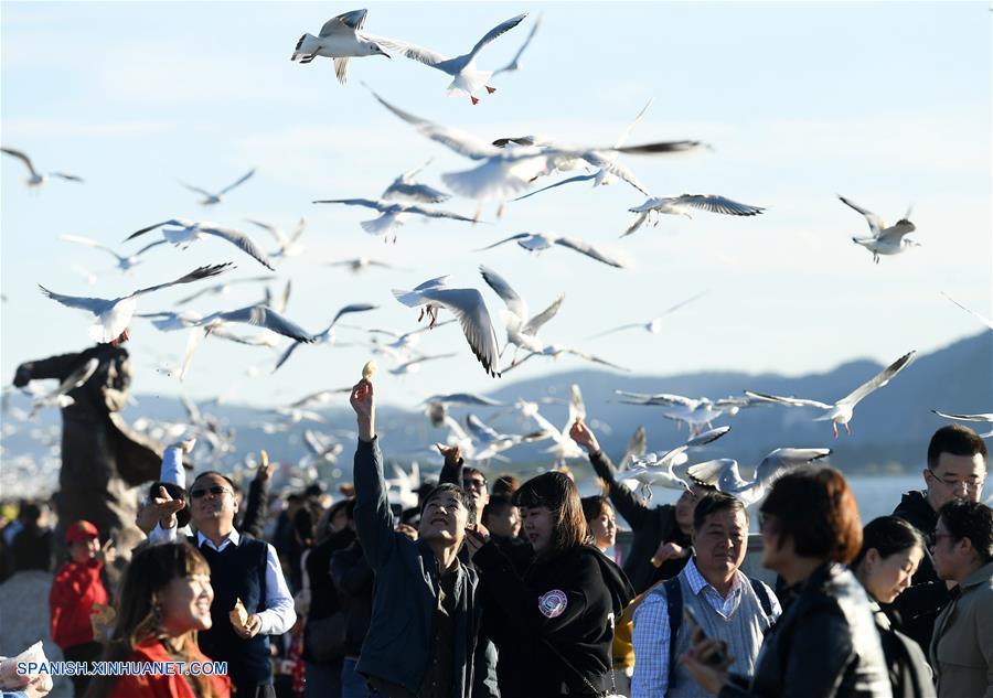 Las gaviotas de pico rojo vuelan a Kunming en busca de un clima más cálido para pasar el invierno