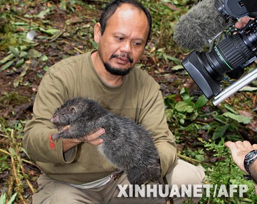 Raton gigante