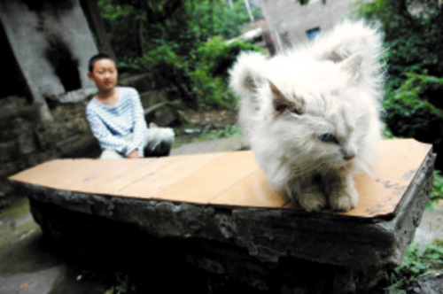 "Gato ""alado"" encontrado en China suroccidental"