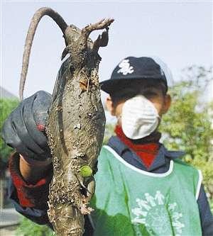 Ir n elimina m s de ratas mutantes enormes - Trampas para ratas grandes ...