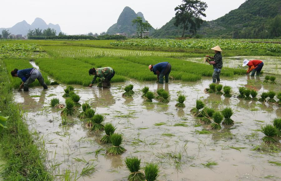 Resultado de imagen para china agricultura